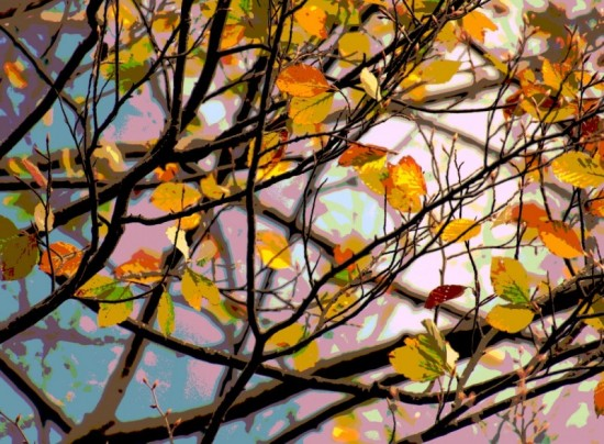 Herbstlich 2